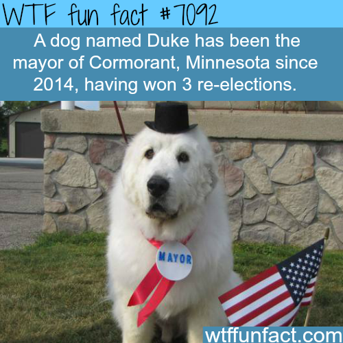 Duke  the Dog - WTF fun facts