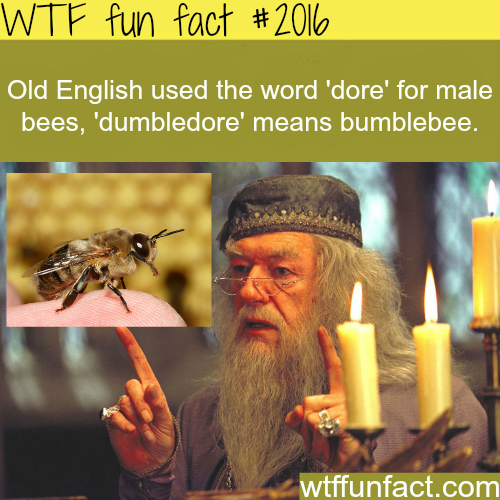 Dumbledore: Bumblebee -WTF fun facts
