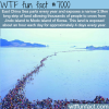 east china sea parting wtf fun facts