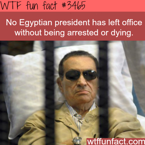 Egyptian Presidents -  WTF fun facts
