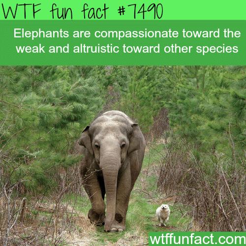 Elephants feel compassion toward the weak - WTF FUN FACTS