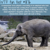 elephants grief wtf fun fact
