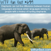 elephants wtf fun fact
