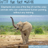 elephants wtf fun facts