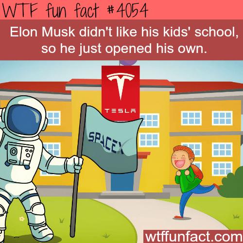 Elon Musk creates his own kids school - WTF fun facts