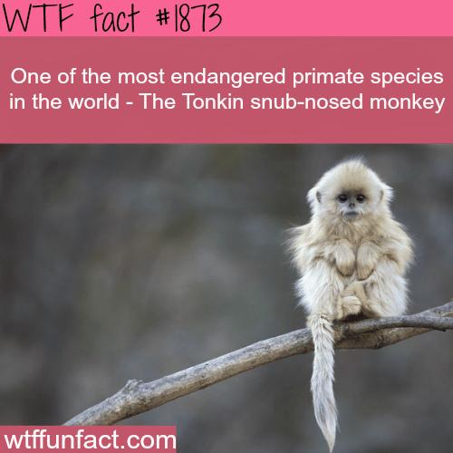 Endangerd Primate species -WTF fun facts