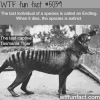 endling wtf fun facts