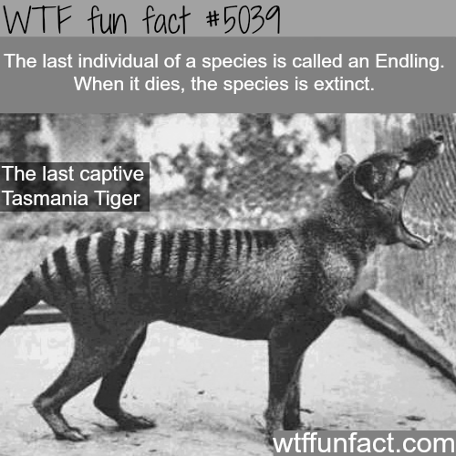 Endling - WTF fun facts
