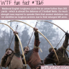 english longbows wtf fun facts