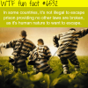 escaping prison in not illegal in some countries