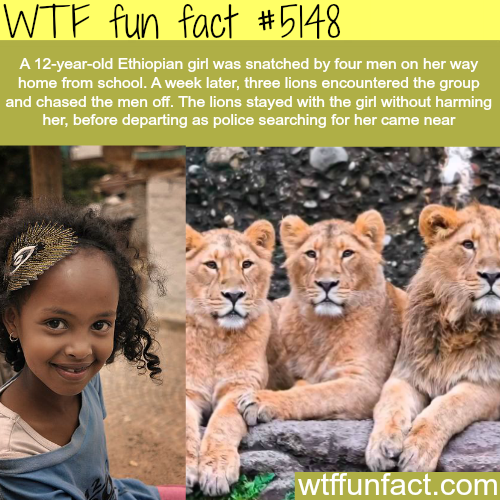 ethiopian girl is saved by three lions wtf fun - WTF Facts