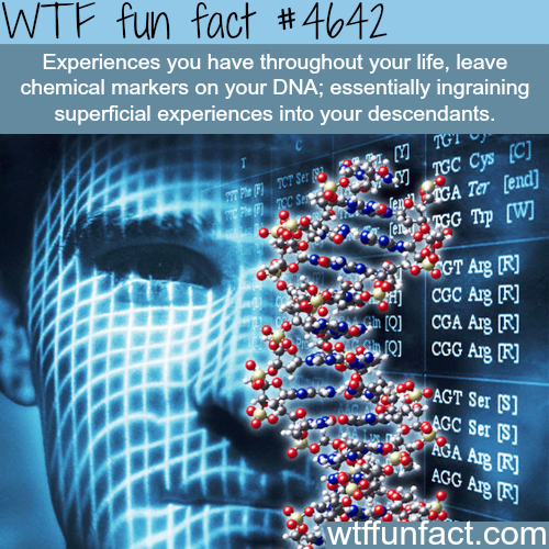 Experiences you have in life will leave a marker on your DNA - WTF fun facts