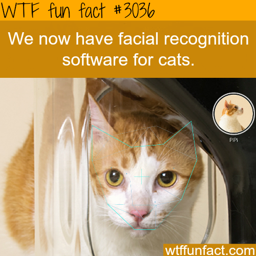 Facial recognition software for cats -WTF fun facts