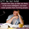 facts about night owls wtf fun facts