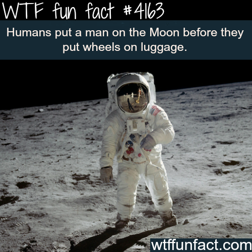 Facts about the moon landing -  WTF fun facts