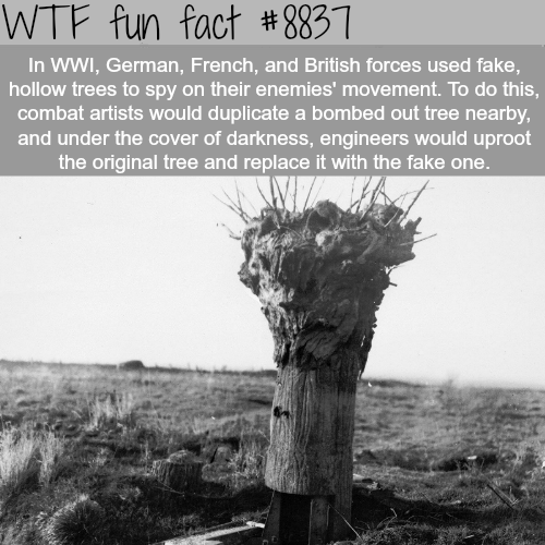 Fake Trees - WTF fun facts