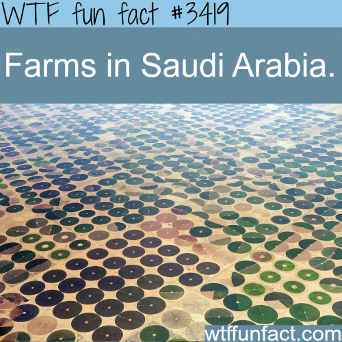 Farms in Saudi Arabia -  WTF fun facts
