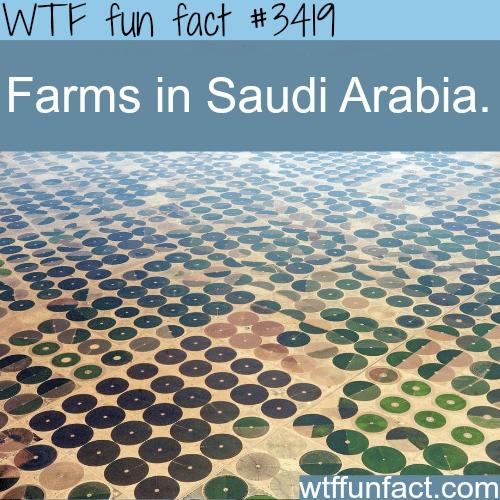 Farms in Saudi Arabia - WTF fun facts