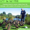 feeding bread to ducks wtf fun facts