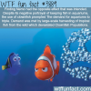 finding nemo devastated the clownfish population
