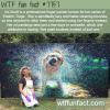 finger artist iris scott wtf fun fact