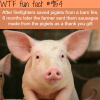 firefighters save piglets from fire wtf fun