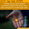 fireflies facts wtf fun facts