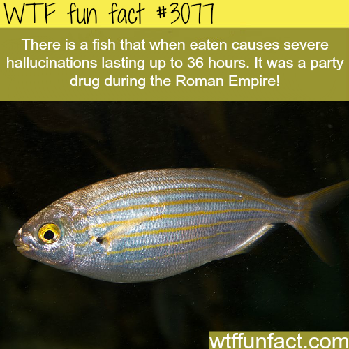 Fish that causes hallucinations -  WTF fun facts