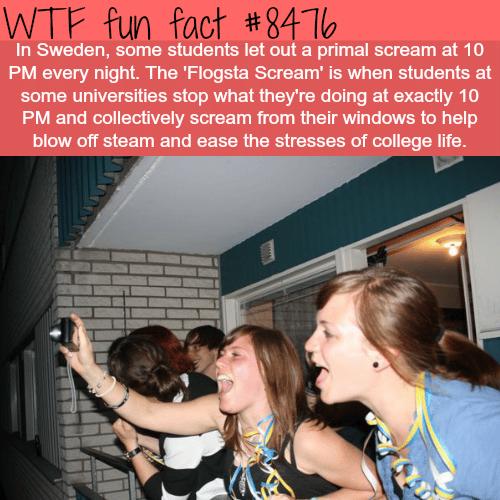 Flogsta Scream - WTF fun facts