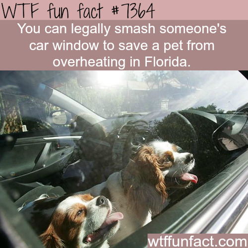 Florida laws makes it legal to smash someone's car to save a pet from heat - WTF fun facts