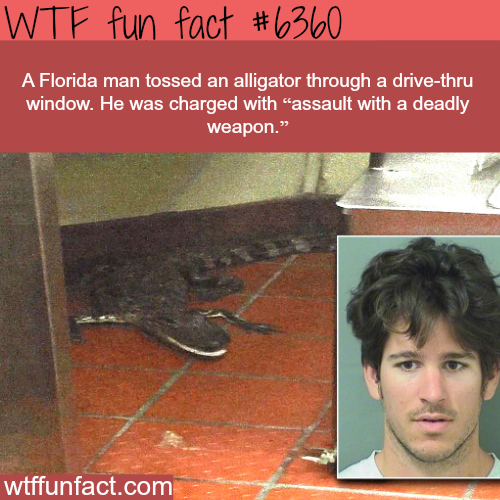 Florida Man - WTF fun facts