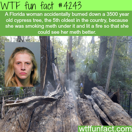 Florida woman burns one of the oldest trees in the country -  WTF fun facts