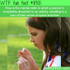 flow wtf fun facts