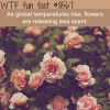 flowers are releasing less scent wtf fun facts