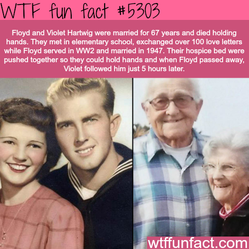 Floyd and Violet Hartwig die together while holding hands - WTF fun facts