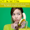 foods that are known to reduce stress facts