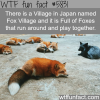 fox village in japan wtf fun facts