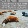 fox village in japan wtf fun facts