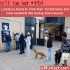 foxes in london wtf fun facts