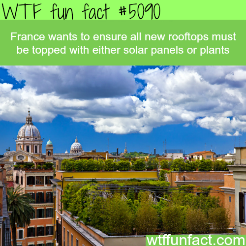 France law requires new rooftops to be topped with solar panels or plants - WTF fun facts