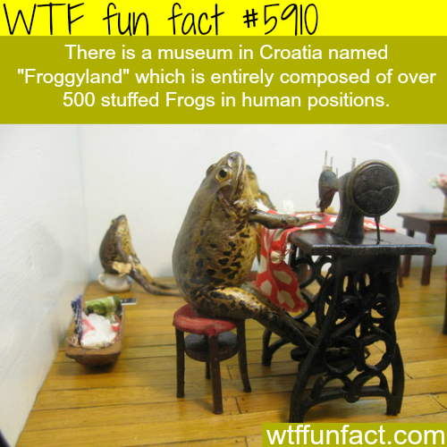 Froggyland museum - WTF fun facts