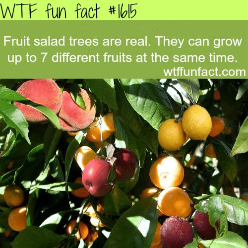 Fruit salad trees