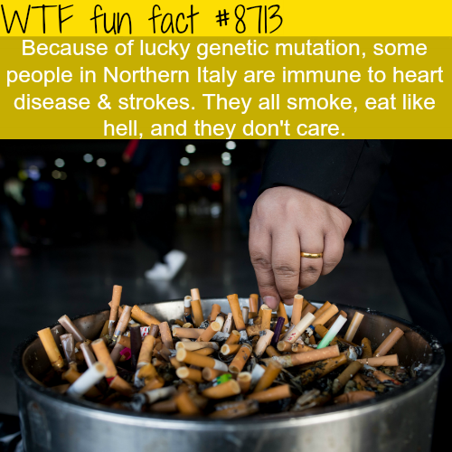Gene mutation made a number of Italians immune to heart diseases - WTF fun facts