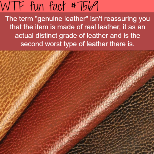 genuine leather - WTF fun facts