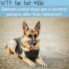 german police dogs get a pension after retirement