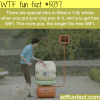 get a free wifi for dog poo wtf fun facts