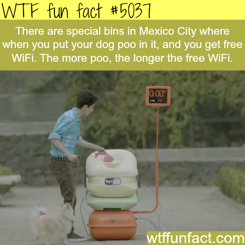 Get a free WiFi for dog poo - WTF fun facts