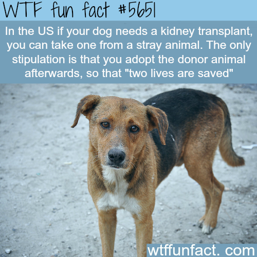 Getting kidney for your dog - WTF fun fact