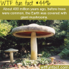 giant mushrooms covering earth wtf fun facts