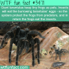 giants tarantulas and pet frogs